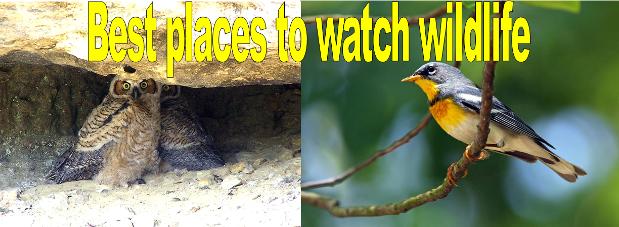 Best places to watch wildlife
